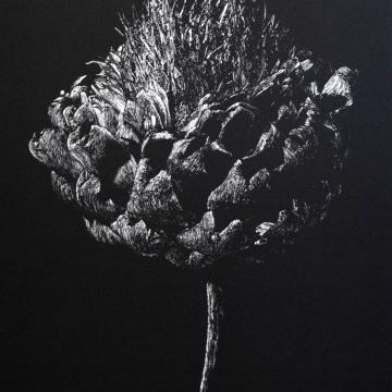 Simply artichoke flower