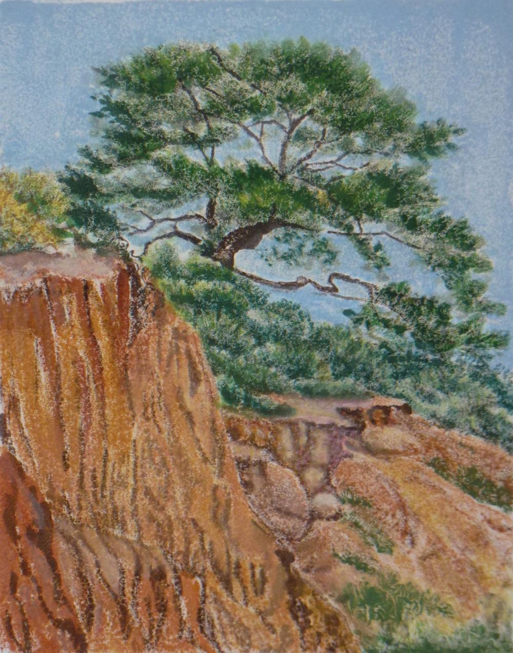 Torrey Pine #2